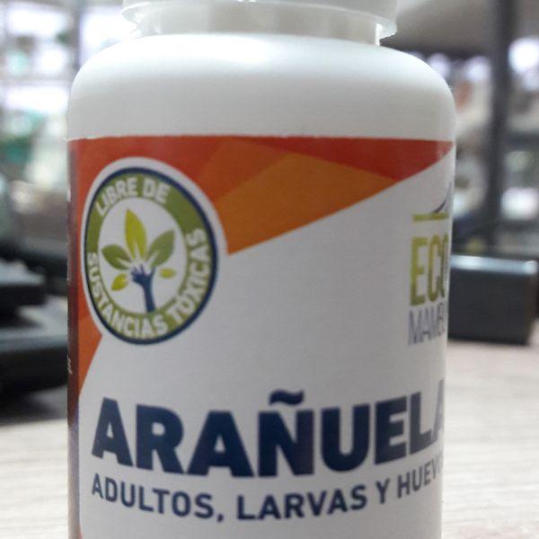 Eco Mambo  Arañuela